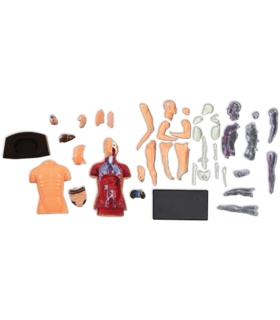Corpo Humano - 393295